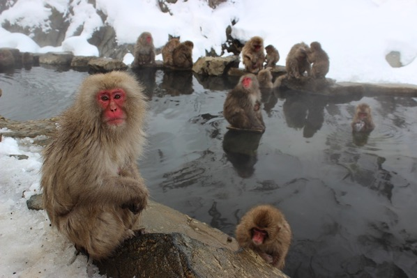 Snow monkeys 1394883 1280